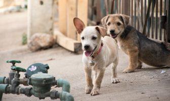 Co dělat, když pes utíká