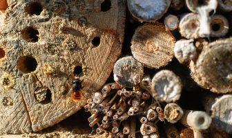 Návod - jak vyrobit hmyzí hotel