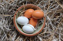 Slepice snáší vejce bez skořápky