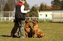 Jak se stát psovodem