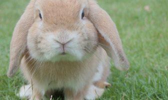 Jména pro králíky