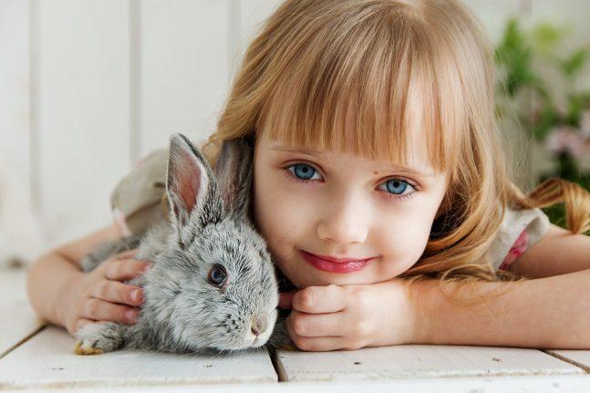 Čím krmit králíky