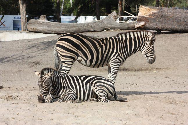 Zoo Wroclaw