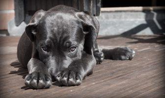 Jak štěně naučit být samo
